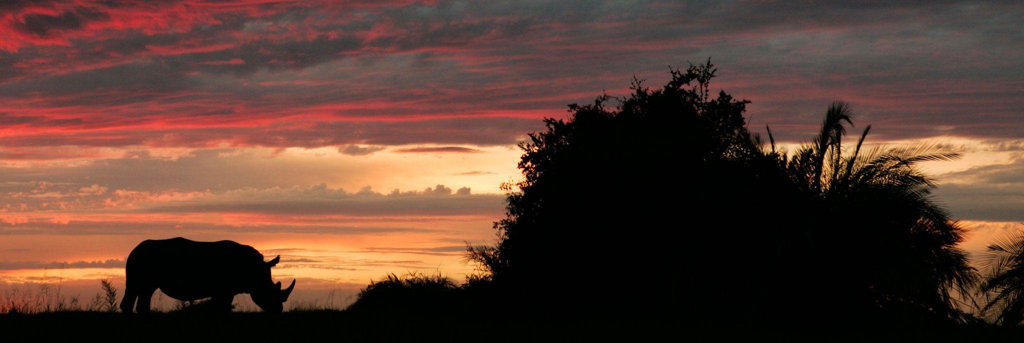 rhino sunset beverly joubert
