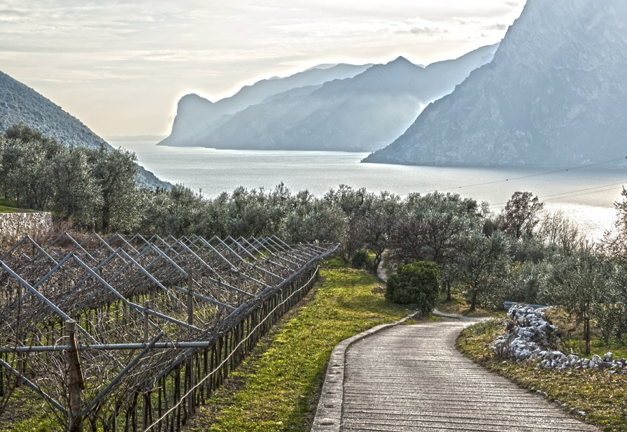 olive trees lake garda