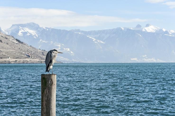 heron mountains lake