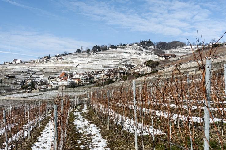 vineyards lavaux view