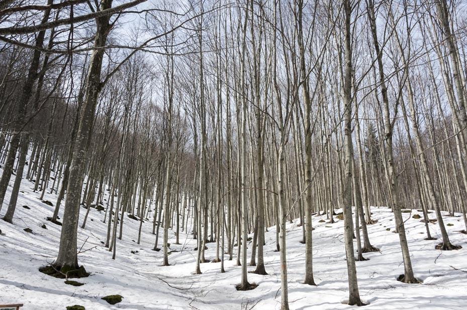forest pian degli ontani tuscany