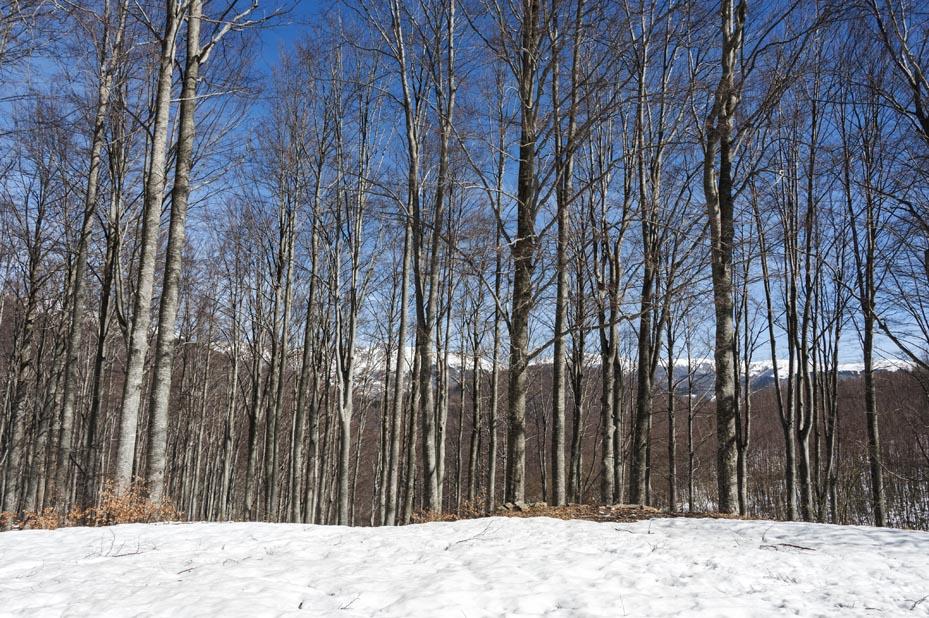 forest mountains pian degli ontani