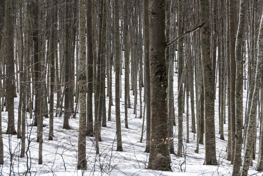 beech trees pian degli ontani