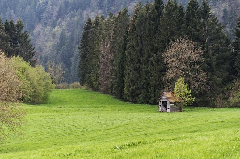 carnic alps mountain meadow