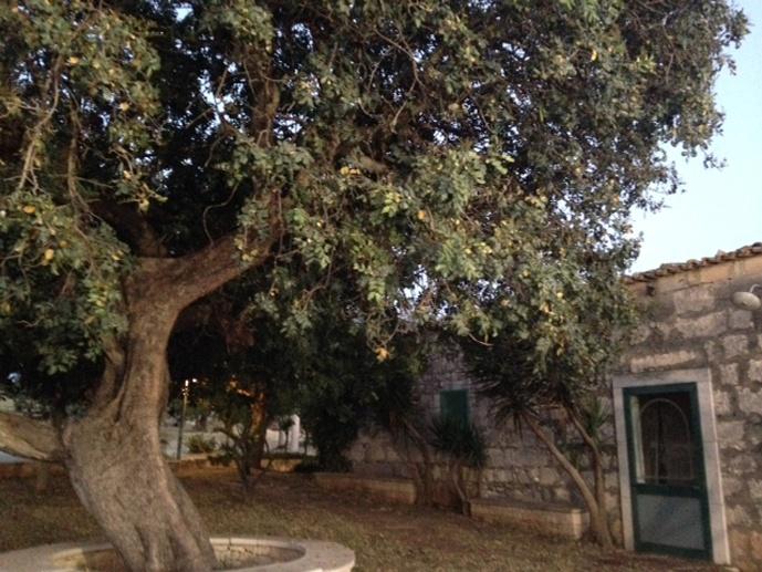 masseria posto di blocco albero