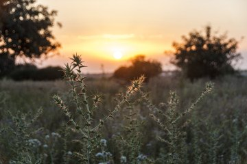 sicily countryside sunset