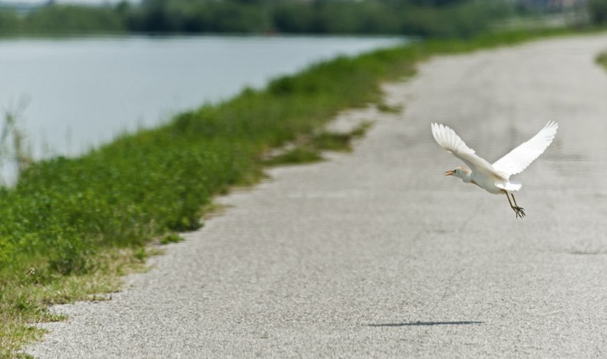 destra po cycle path with heron