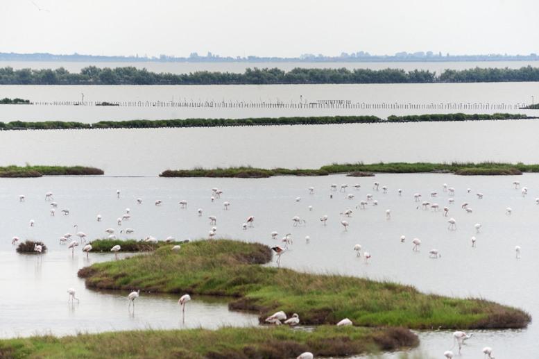 flamingo lagoon landscape po delta