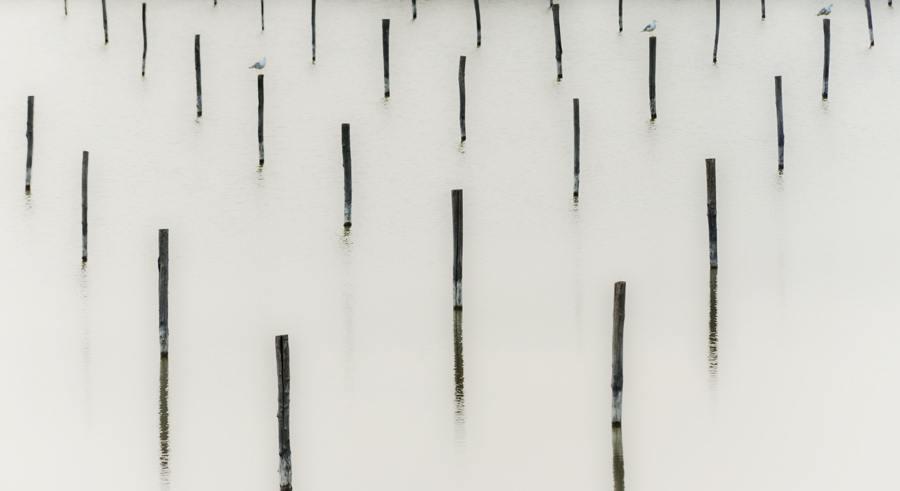 birds on sticks lagoon