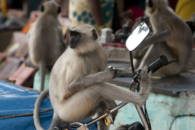 Hampi monkey bike