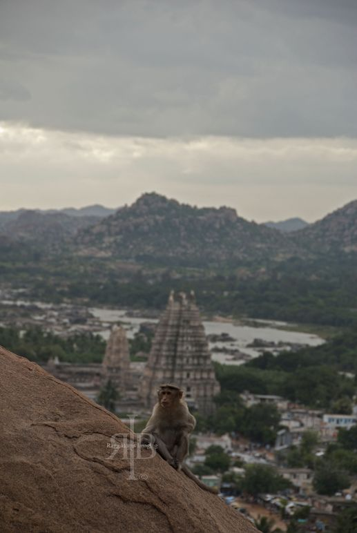 Hampi monkey view