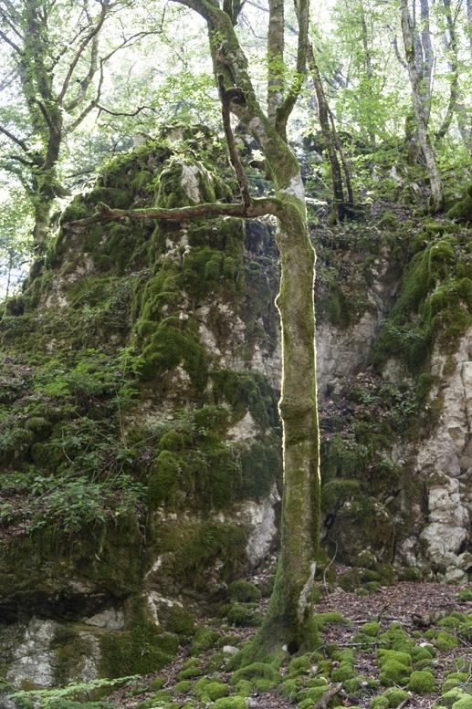 la verna forest tree light