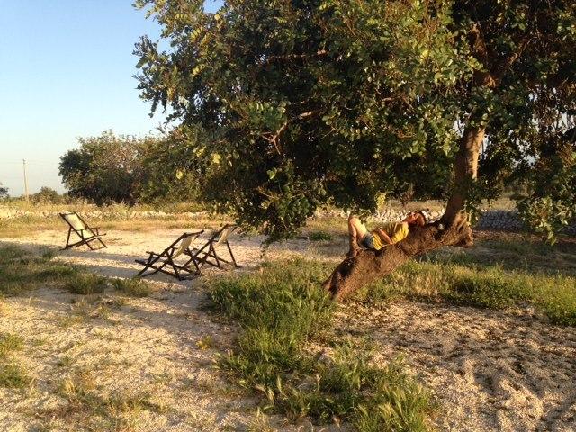 le chiuse di guadagna carob tree relax