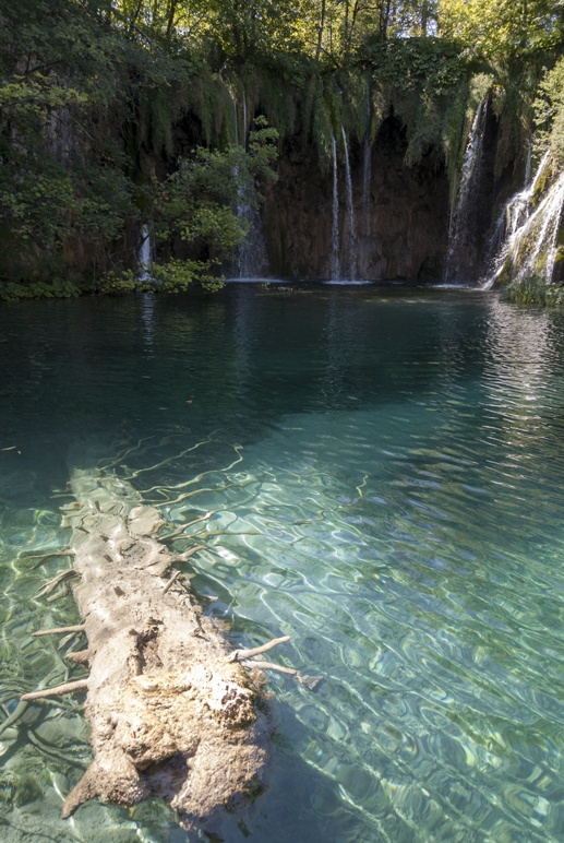 croatia plitvice tree in lake