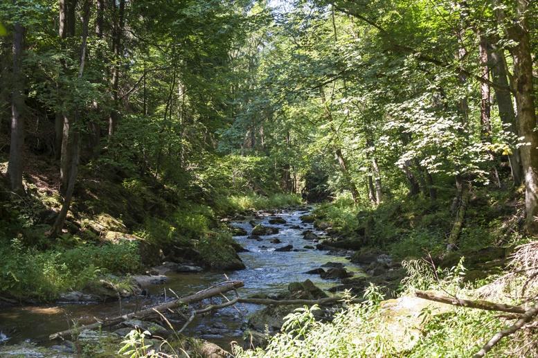czech paradise kamenice river