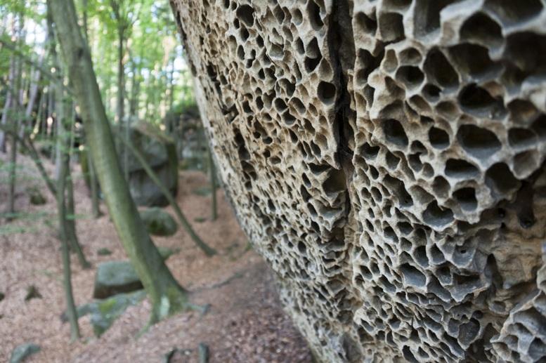 sandstone wood czech republic