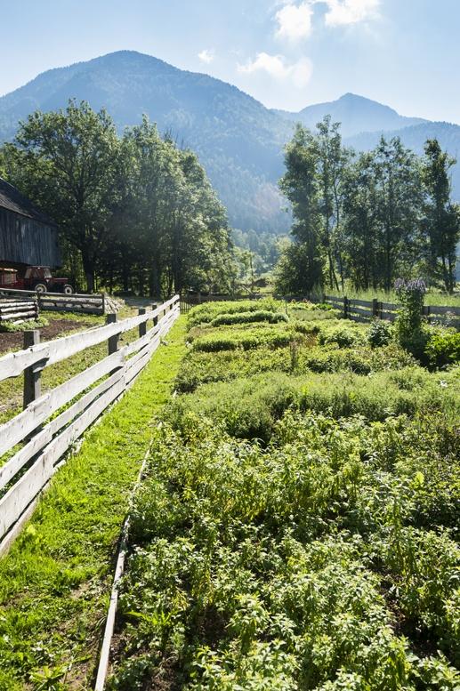 herb garden jezersko