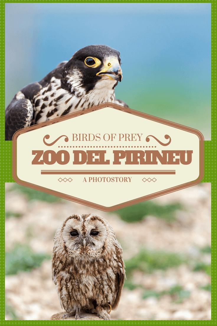 Www Bing Com1 Microsoft Way Redmond: Zoo Del Pirineu: A Photostory