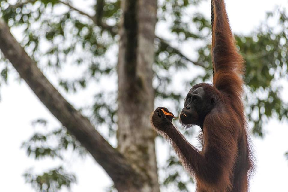 horrible truth about palm oil semenggoh