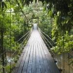 Gunung Mulu National Park – Caves, Bats and Luxury