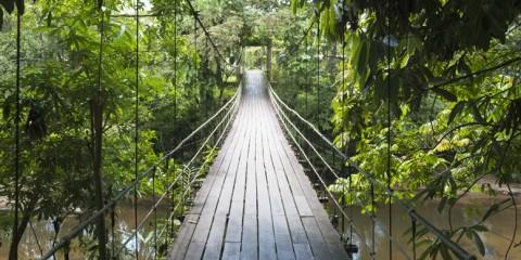Gunung mulu national park hanging bridge
