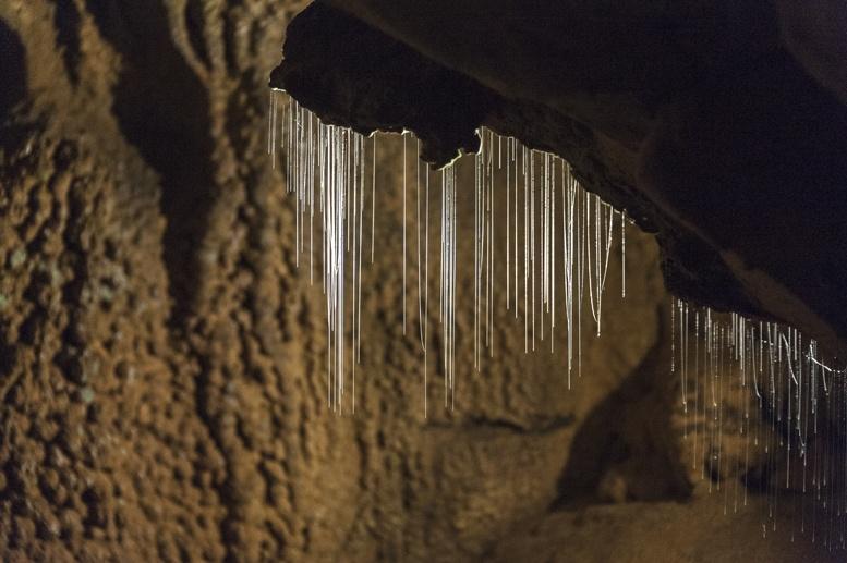 worms lang cave mulu sarawak