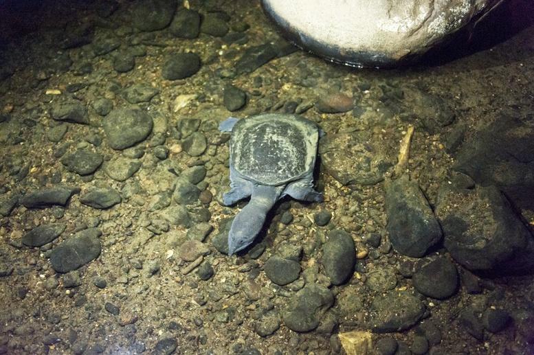 turtle lang cave mulu sarawak
