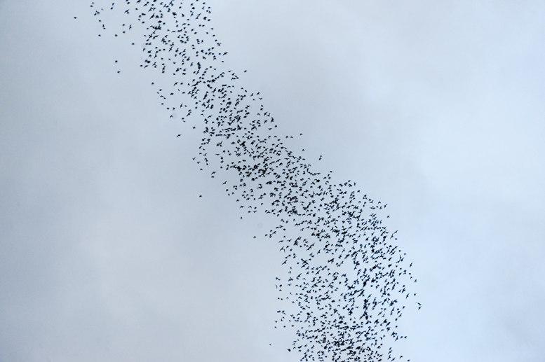 bat swarm malaysia