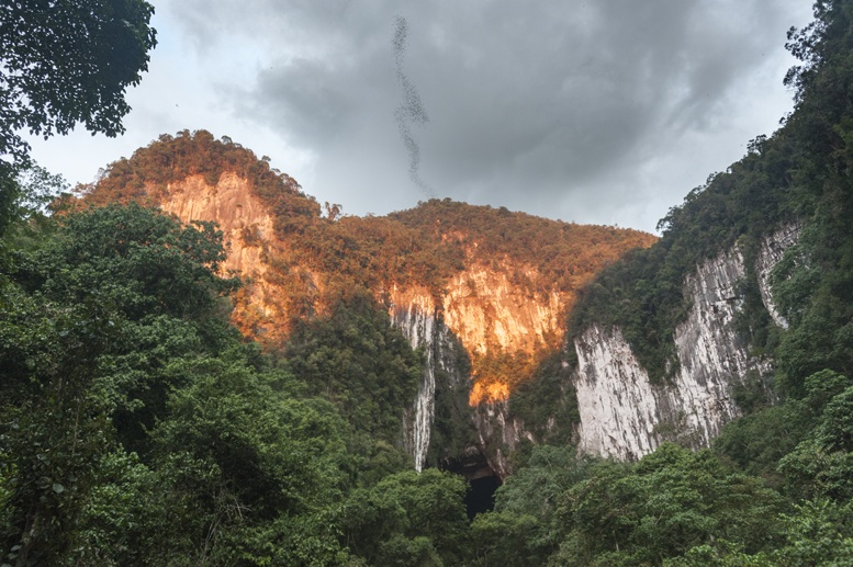 bat exodus gunung mulu