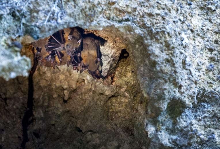 bats wind cave mulu