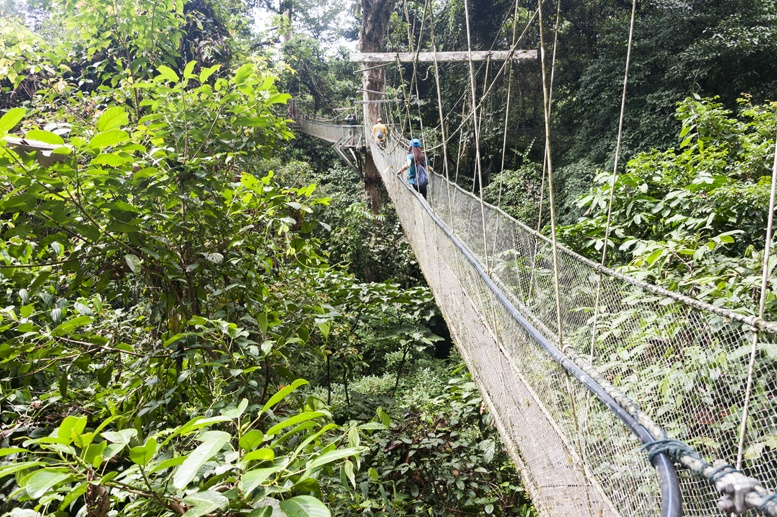 mulu canopy skywalk