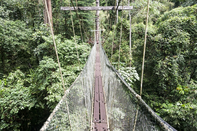 mulu canopy skywalk bridge