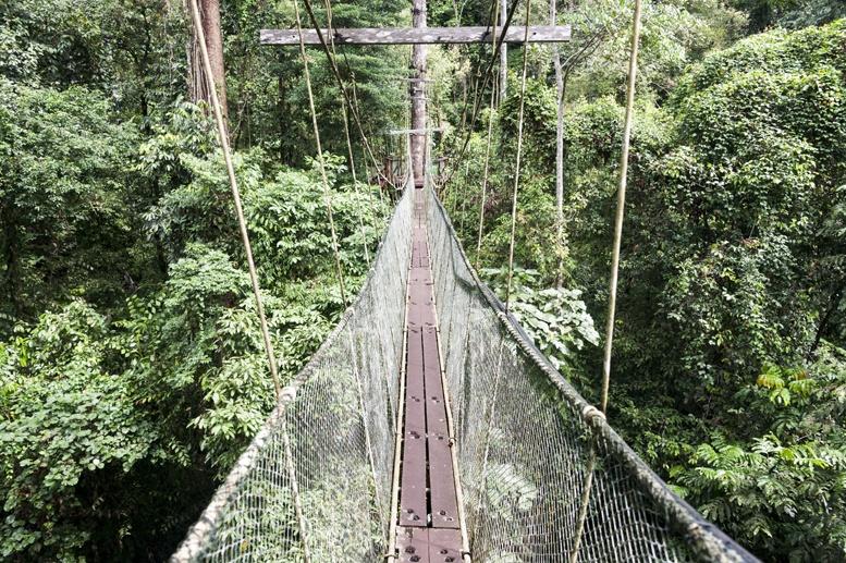 mulu canopy skywalk bridge