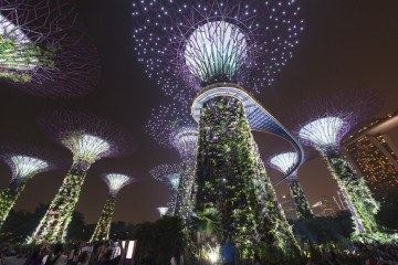 finding nature in singapore supertrees