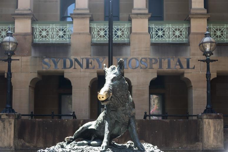 sydney hospital porcellino