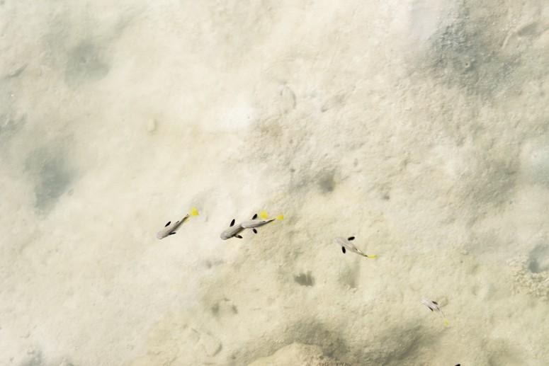 tiny fish white sand danjugan