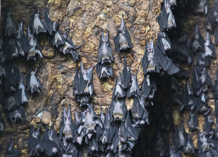 bat cave danjugan