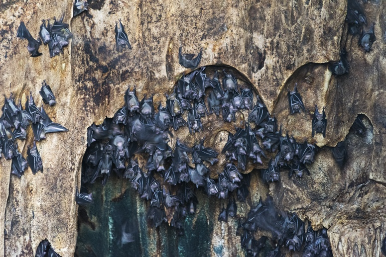 bat cave danjugan island