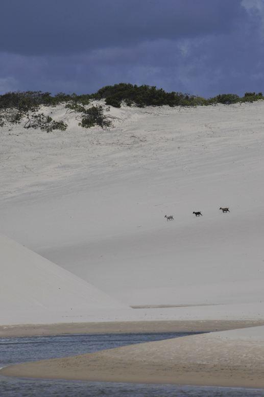 Lençois maranhenses park brazil dunes