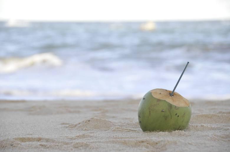 maceio brazil coconut on beach