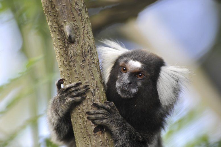 maceio brazil monkey