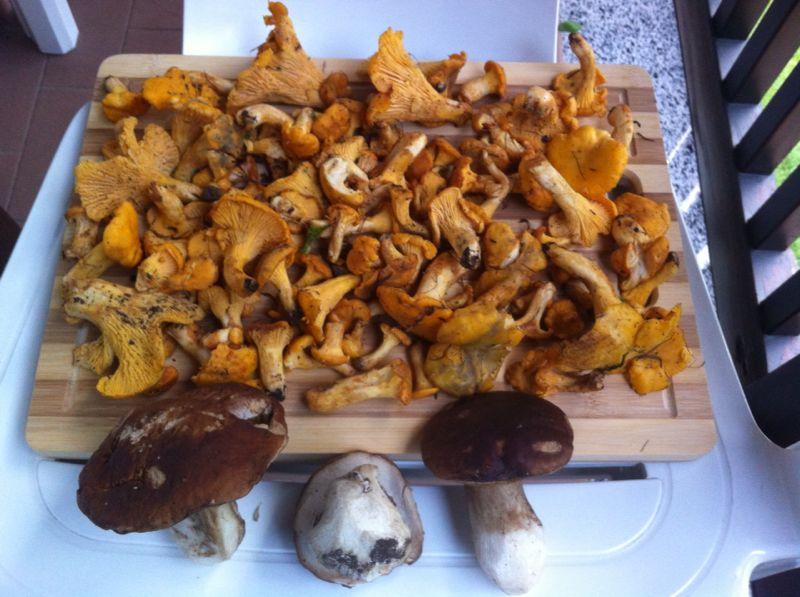 lombardia food funghi