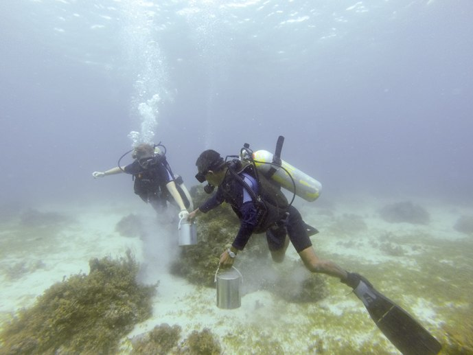 diving bohol cleaning up