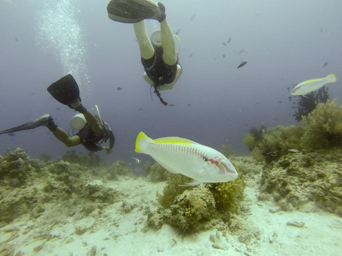 diving bohol philippines fish photobomb