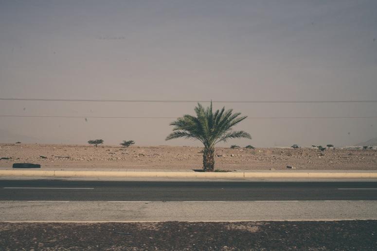 jordan road trip palm