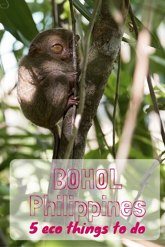 things to do in bohol pin 2