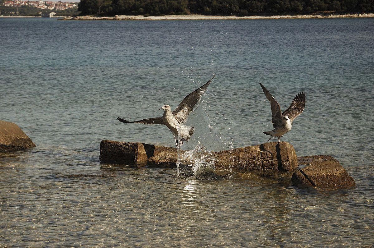 brijuni national park birds