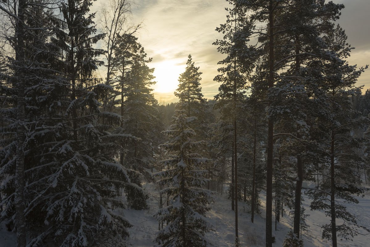 what to do in helsinki in winter trees