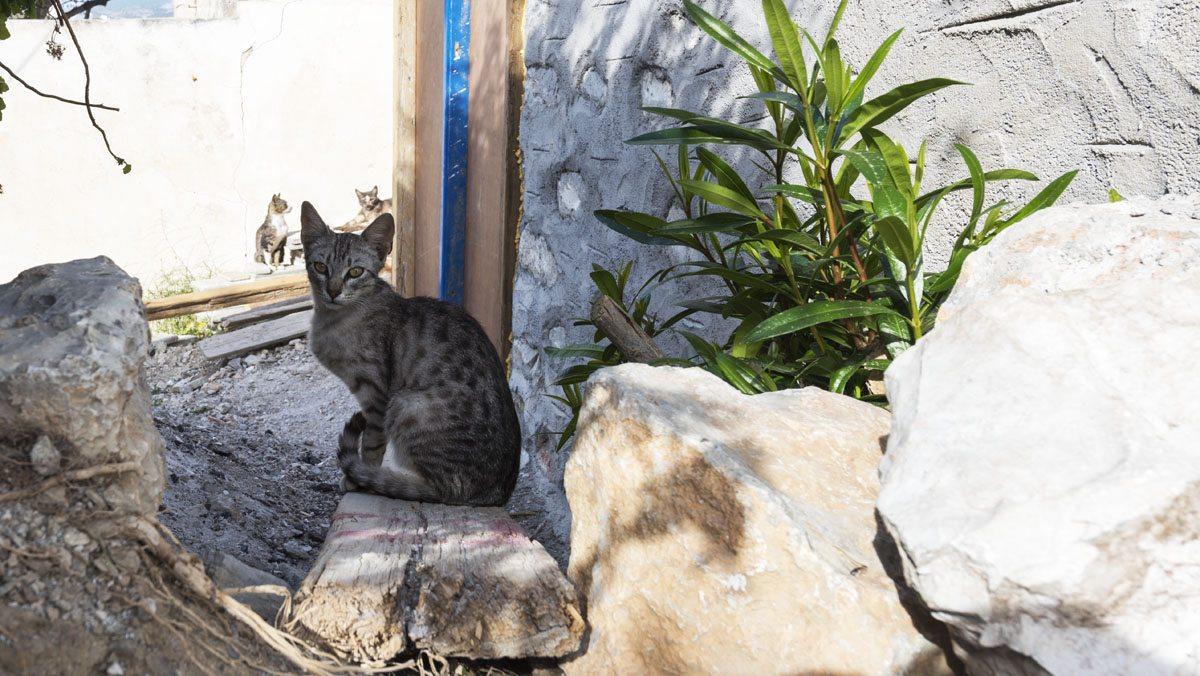 greek island cats