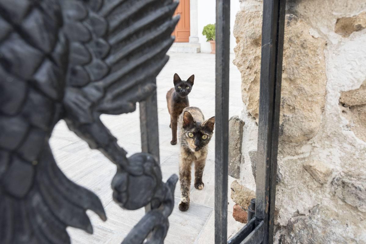 greek island cats 2